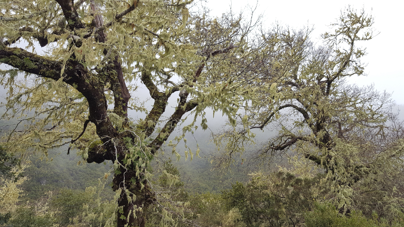 Madeira, bei Rabacal