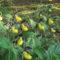 Frauenschuhwanderung – Orchideenweg von Fürnried nach Lichtenegg und zurück