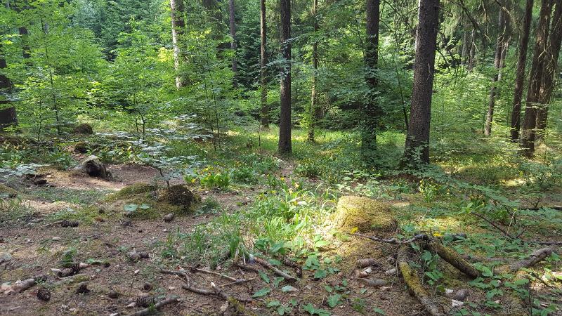 Frauenschuhe-Orchideen Wanderweg bei Fürnried