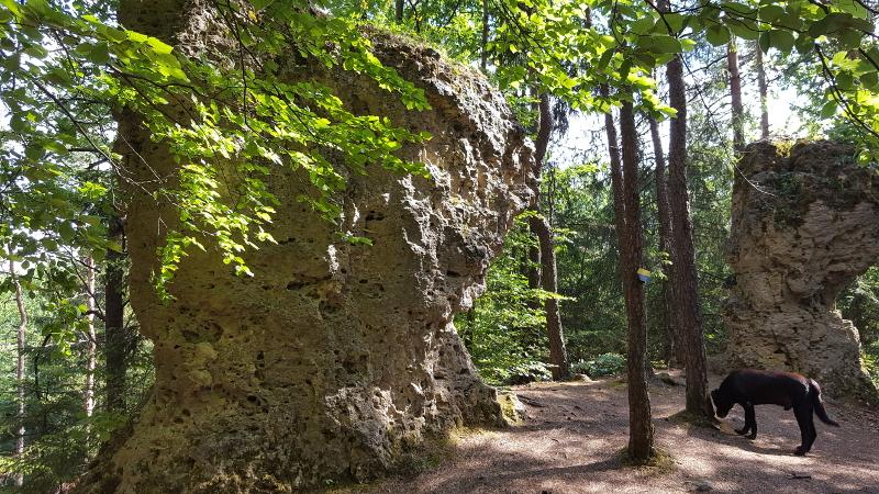 Wanderung Orchideenweg bei Fürnried