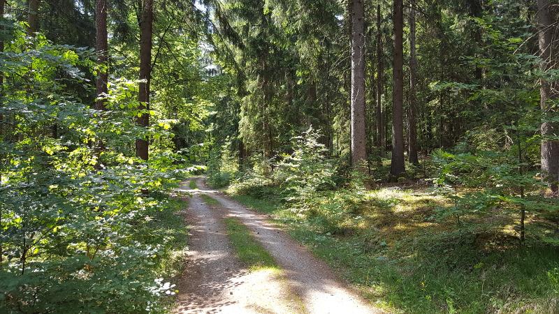 Wanderweg bei Fürnried