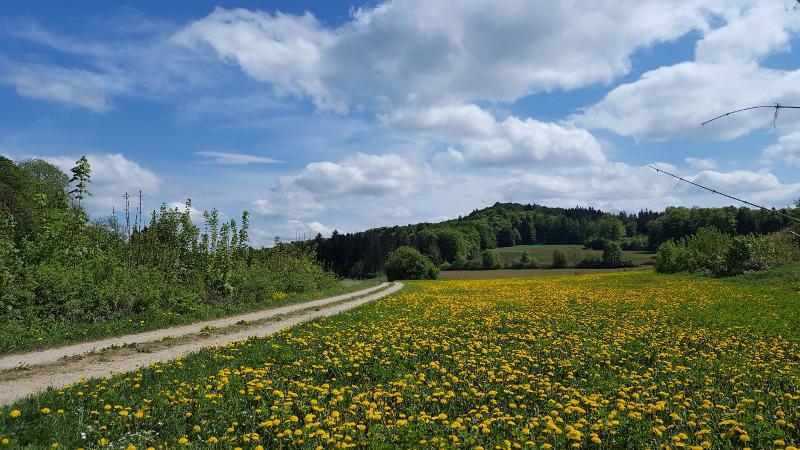 Wanderweg mit Blick auf den Großen Hansgörgl bei Hersbruck