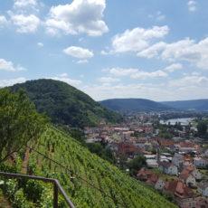 Mainradweg von Miltenberg bis Aschaffenburg - Blick hinab ins Maintal bei Klingenberg