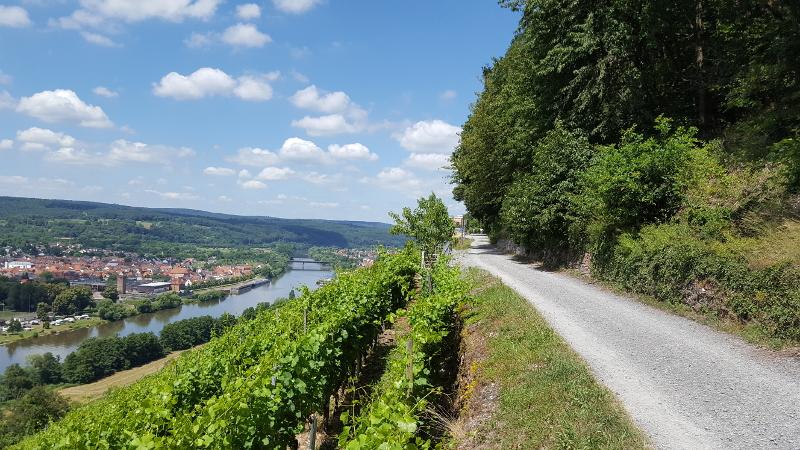 Mainradweg von Miltenberg bis Aschaffenburg - Rotweinwanderweg bei Erlenbach am Main