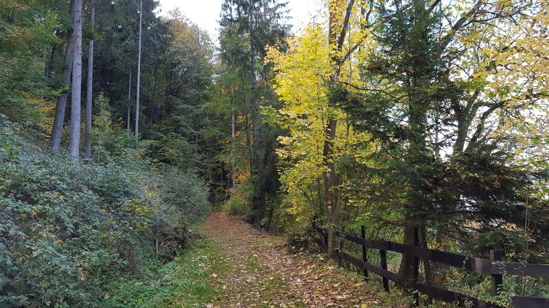 Wanderweg hoch nach Reicheneck