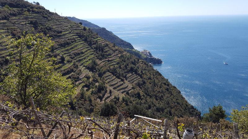 Steile Weinhänge in der Cinque Terre