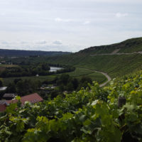 Mundelsheim Aussicht auf den Neckar