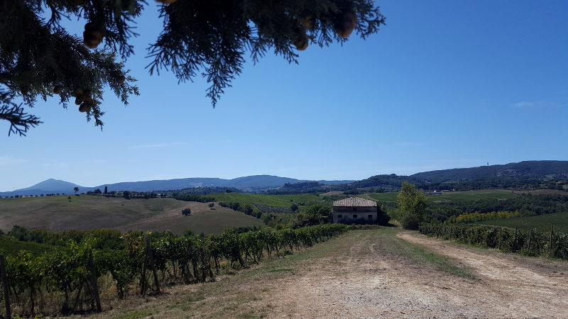 Montepulciano Radtour in den Weinbergen
