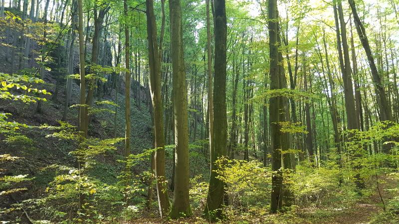 Wanderung Molsberger Tal - Gaiskammer