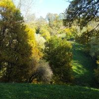 Naturschutzgebiet Oberes Molsberger Tal