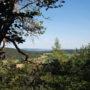 Wanderung zum Kalmus-Kletterfels bei Illschwang