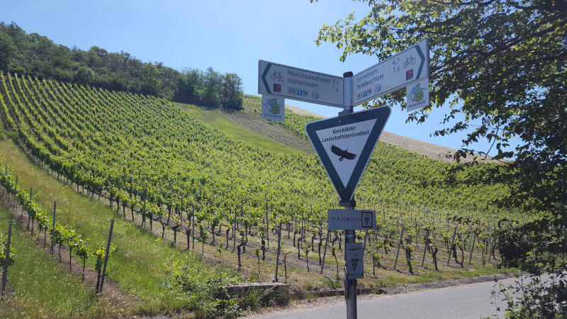 Auf dem Weg zur Weinparadiesscheune