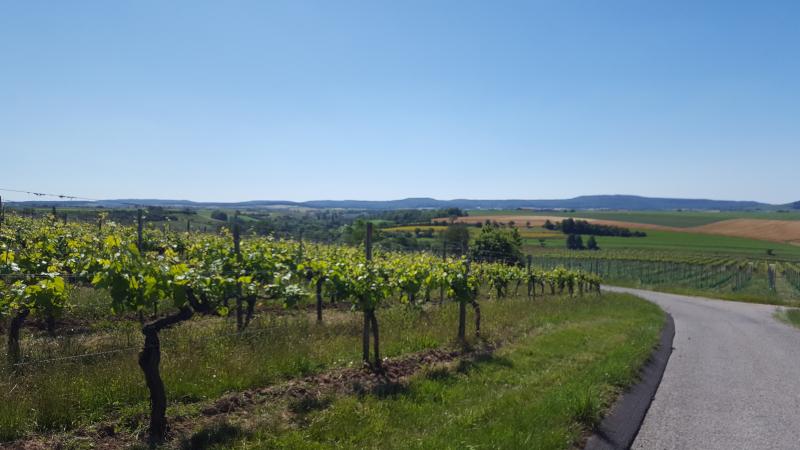 Durch die Weinlagen nach Mönchsondheim