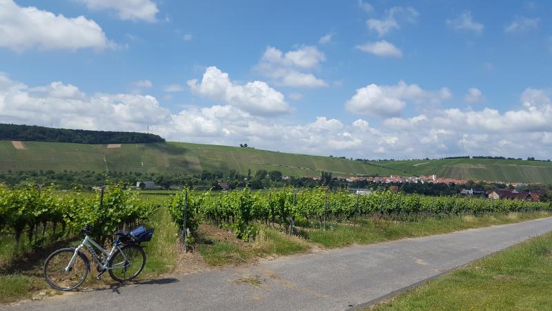 Main Weininsel - auf dem Weg zur Panorama Plattform