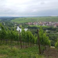Mainschleifentour - Blick von der Vogelsburg auf Nordheim