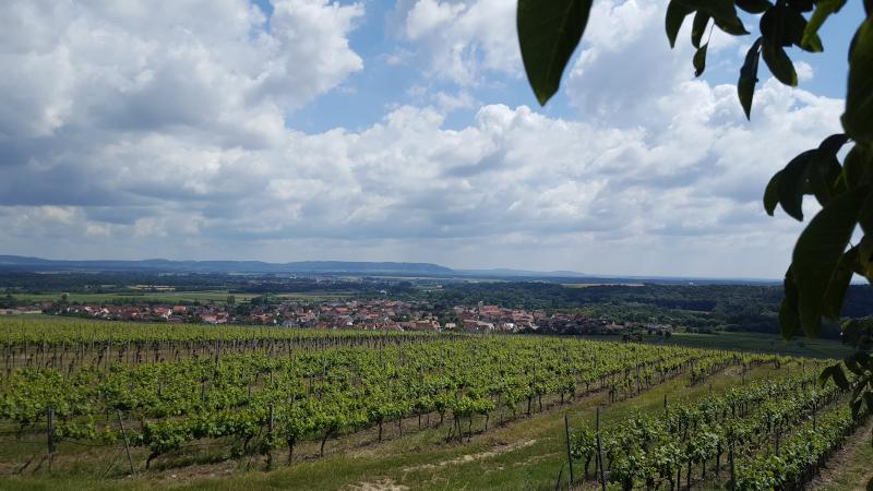 Weininsel Main - Aussicht von Panoramaplattform