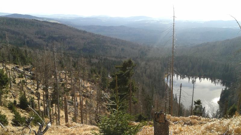 Bayerischer Wald See Rachel