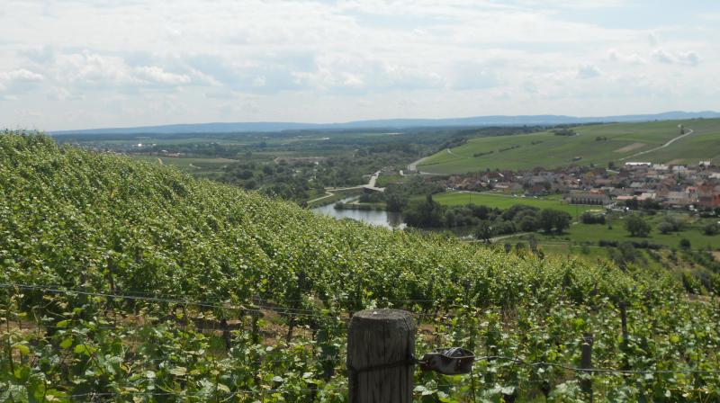 Volkacher Mainschleife und Weininsel